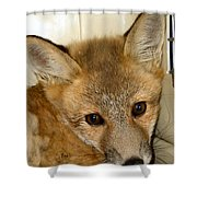 Foxy Broad Shower Curtain