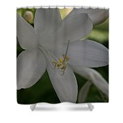 Fragrant Plaintain Lily Shower Curtain