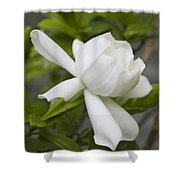 Fragrant White Gardenia Blossom Shower Curtain