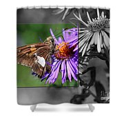 Framed Butterfly Shower Curtain