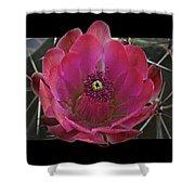 Framed Fuchsia Cactus Flower Shower Curtain