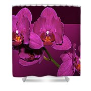 Framed Orchids Shower Curtain