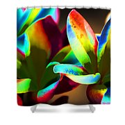 Frangipani Flowers Of Color Shower Curtain