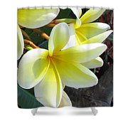 Frangipani Up Close Shower Curtain