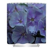Franz Schubert Phlox Shower Curtain