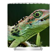 Frasers Anole Anolis Fraseri Male Shower Curtain