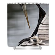 Fred The Great Blue Heron Shower Curtain