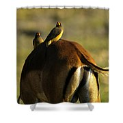 Free Ride Shower Curtain
