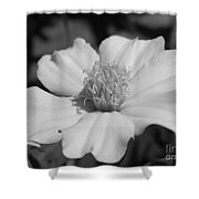 French Marigold Named Disco Yellow Shower Curtain