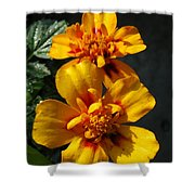 French Marigold Named Starfire Shower Curtain
