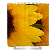 French Sunflowers Shower Curtain
