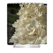 French Vanilla Hydrangea Shower Curtain