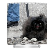Frenchman And His Dog Shower Curtain
