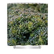 Fresh Broccoli Shower Curtain by Susan Herber