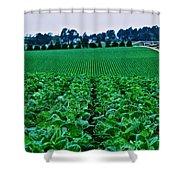 Fresh Cabbage Shower Curtain