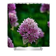 Fresh Chives Shower Curtain