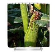 Fresh Corn On The Cob Shower Curtain