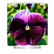 Fresh Face Pansy Shower Curtain