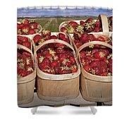 Fresh Picked Strawberries Shower Curtain