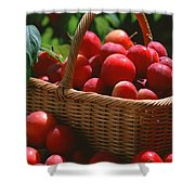 Fresh Red Plums In The Basket Shower Curtain
