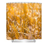 Freshness Shower Curtain