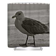 Friendly Gull Shower Curtain