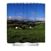 Friesian Cattle, Allihies, Co Cork Shower Curtain