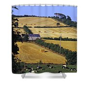 Friesian Cattle Shower Curtain
