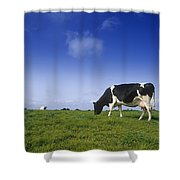 Friesian Cow Grazing In A Field Shower Curtain