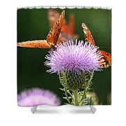 Fritillary Wings And Thistles Shower Curtain