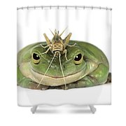 Frog And Grasshopper Shower Curtain
