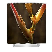 Frog And Heliconia Shower Curtain
