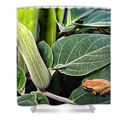 Frog And Moonflower Shower Curtain
