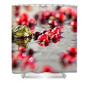 Frog At A Cape Cod Cranberry Bog Shower Curtain