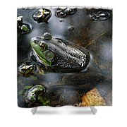 Frog In The Millpond Shower Curtain