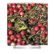 Frog Peaks Up Through Cranberries In Bog Shower Curtain