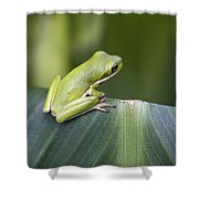 Froggie On A Leaf Shower Curtain