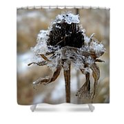 Frost And Snow On Dead Daisy Shower Curtain