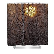 Frost-covered White Birch Trees Shower Curtain