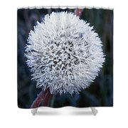 Frost On Mature Dandelion Blossom Shower Curtain