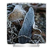 Frosted Feather Shower Curtain