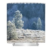 Frosted Morning Shower Curtain