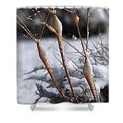 Frosted Trumpets Shower Curtain