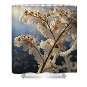 Frosty Dry Wood Aster Shower Curtain