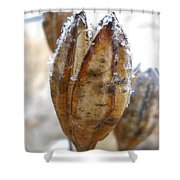 Frosty Tiger Lily Seed Pod Shower Curtain