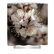 Fruit Bouquet Shower Curtain