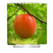 Fruit Plums Red Shower Curtain