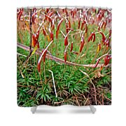Fruiting Moss - Red And Green Tableau Shower Curtain