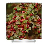 Fruits Of The Season Shower Curtain