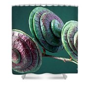 Fruits Of Wild Lucerne Shower Curtain by Nuridsany et Perennou and Photo Researchers